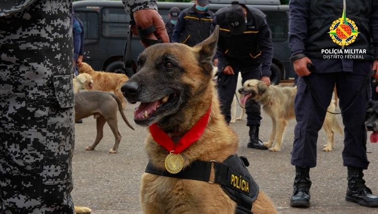 Cães policiais aposentados são homenageados e PMDF recebe os novos integrantes especialistas na localização de pessoas